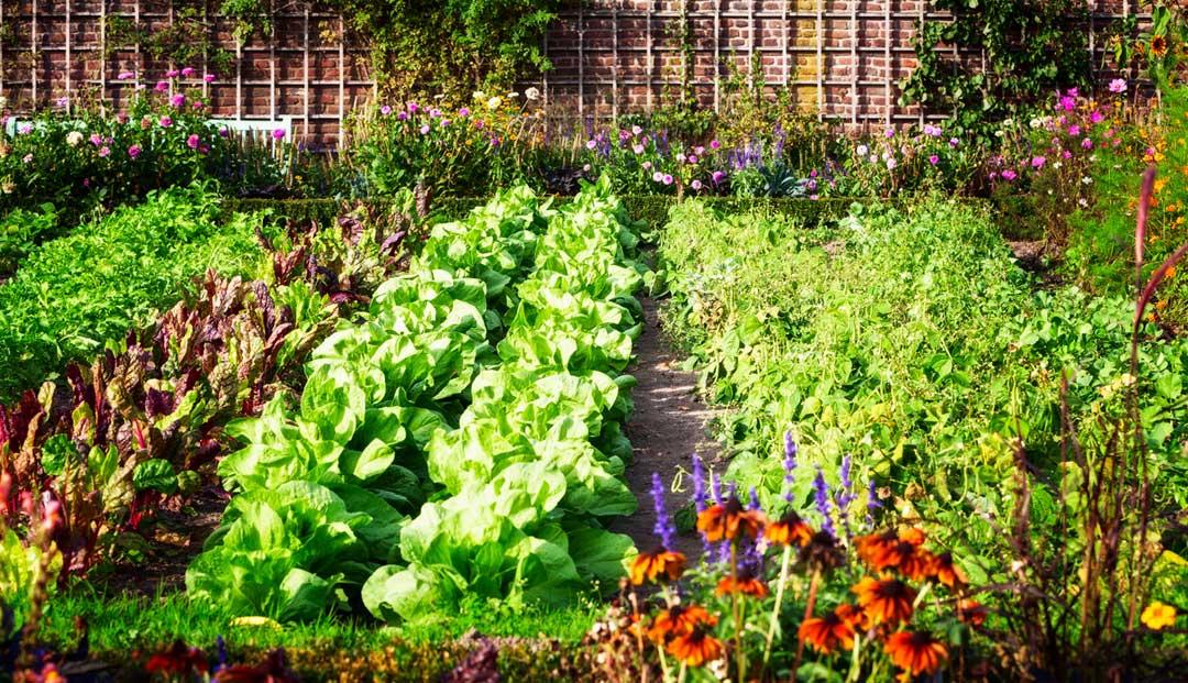 Los mejores consejos para tu huerto ecológico