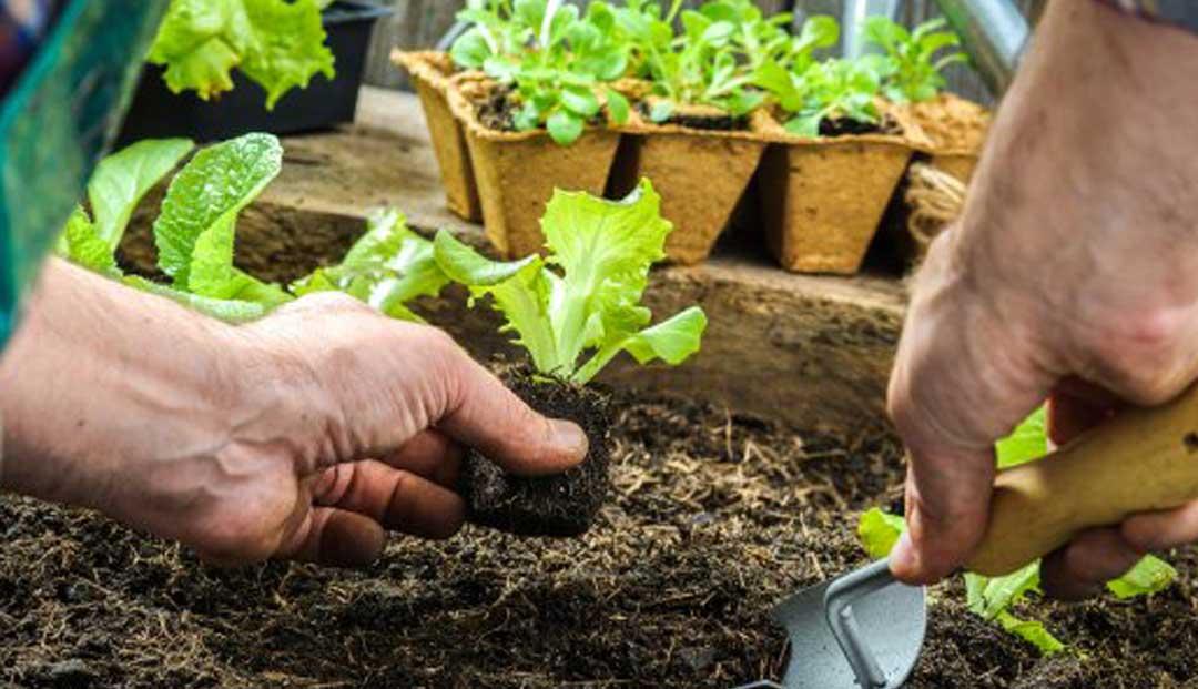 Crear un huerto ecológico paso a paso