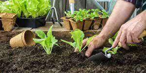 ¿Qué cultivar en el huerto?