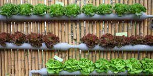 Sistemas de cultivo hidropónico en casa